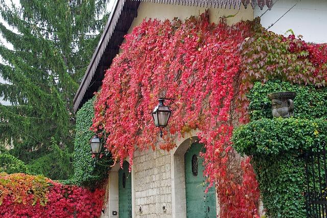 image libre de droit de pixabay - sur la photo la facade d'une maison qui a des plantes grimpantes.